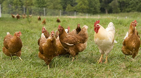 Free-Range, Cage Free, Pasture Raised, All-Natural: What Does it Really Mean?